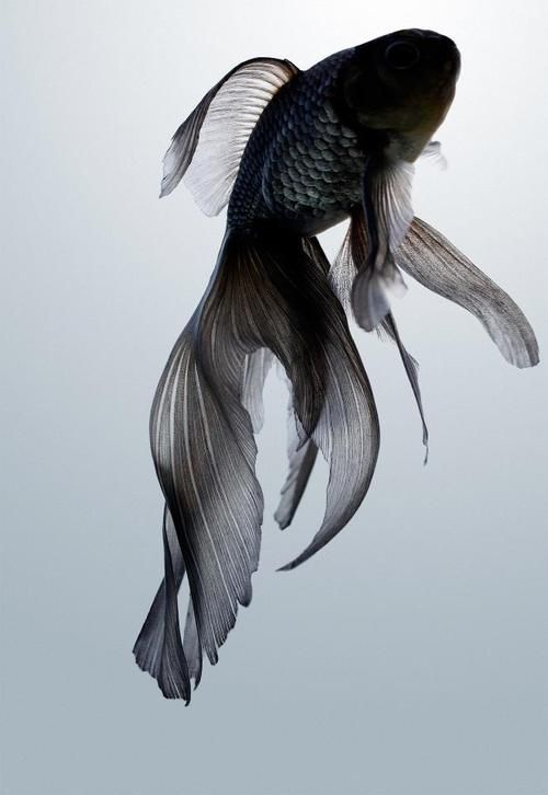 fish photography 9
