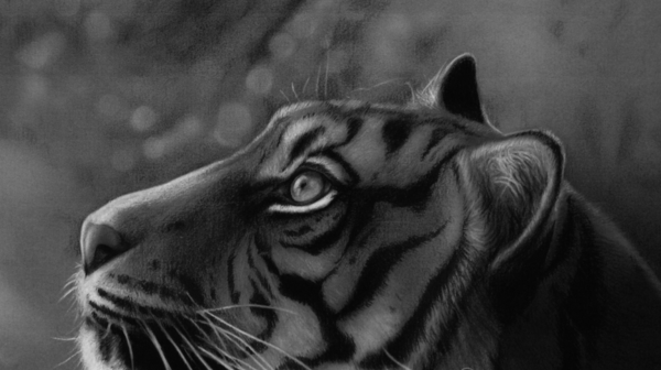beautiful-illustrations-of-charcoal-painting0261