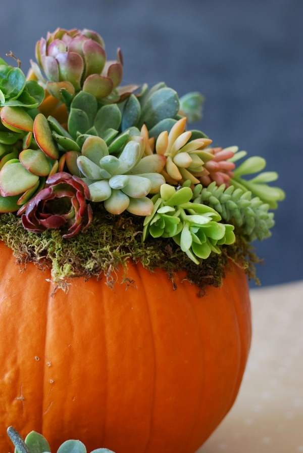 diy-thanksgiving-decoration-ideas-for-everyone0411