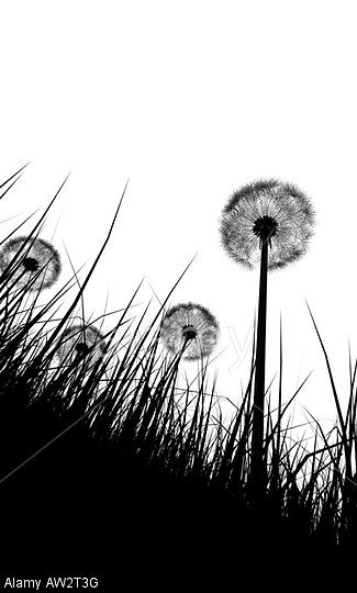 black-and-white-art-21