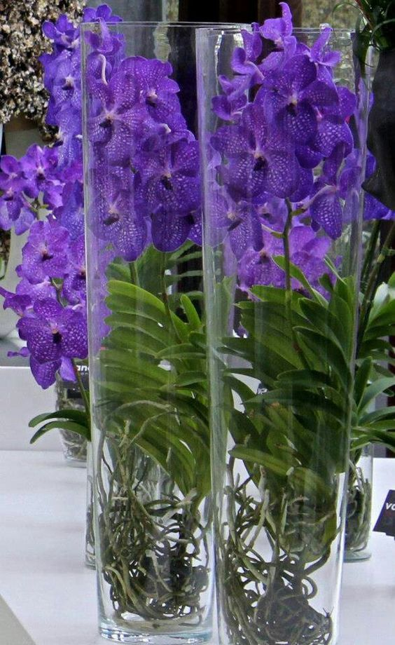 Learn How To Pair Flower Vases For The Best Results