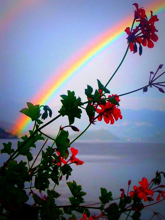 rainbow-photography-16