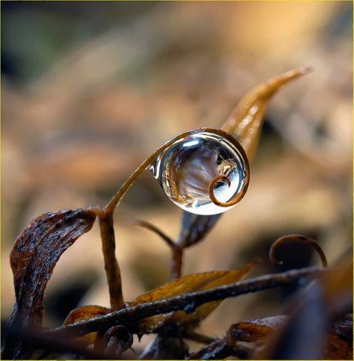 waterdrop-art-16