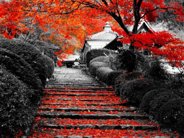 magical-fall-photography-ideas-to-try-this-year0061