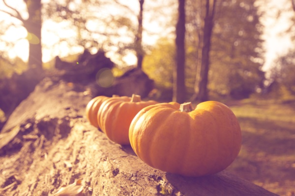 magical-fall-photography-ideas-to-try-this-year0111