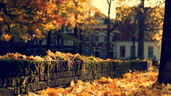 magical-fall-photography-ideas-to-try-this-year0131