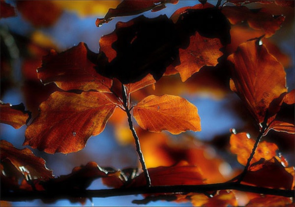magical-fall-photography-ideas-to-try-this-year0171