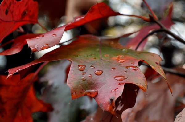 magical-fall-photography-ideas-to-try-this-year0241
