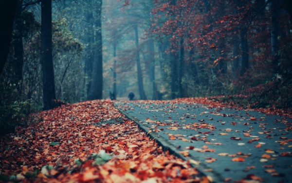magical-fall-photography-ideas-to-try-this-year0261