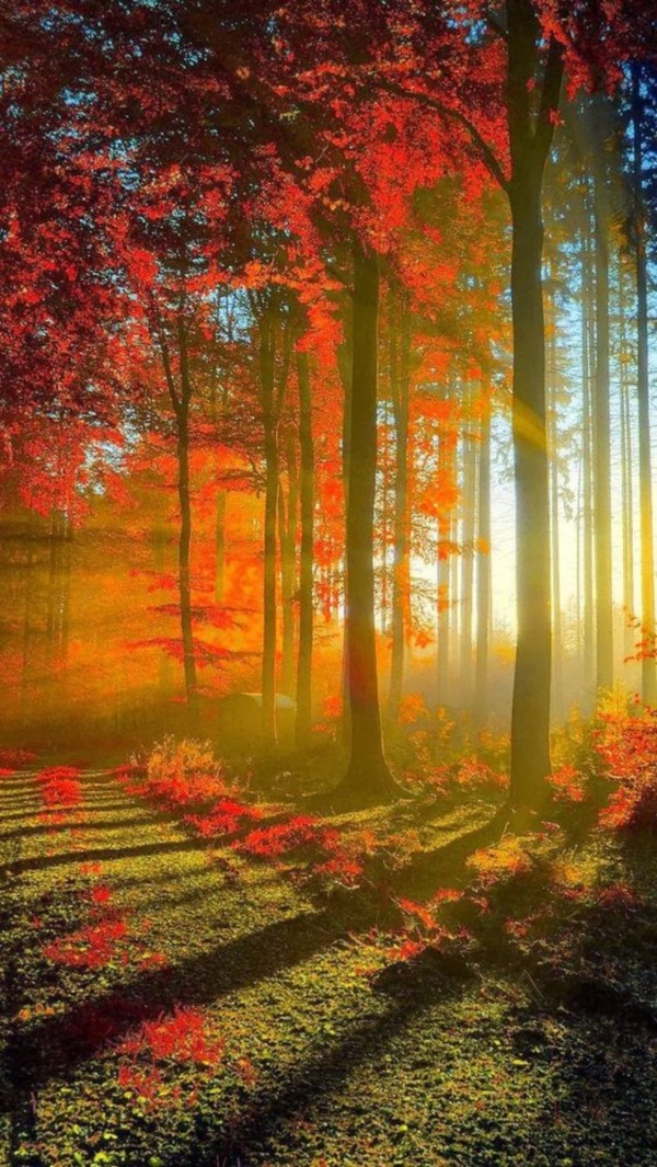 magical-fall-photography-ideas-to-try-this-year0301