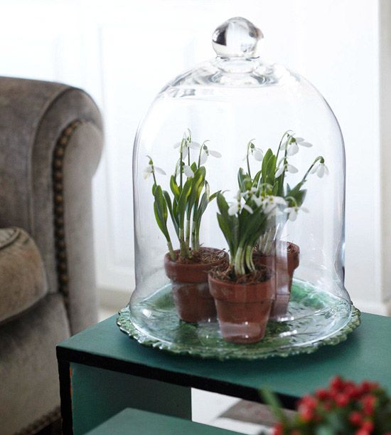 bell-jar-ideas-13