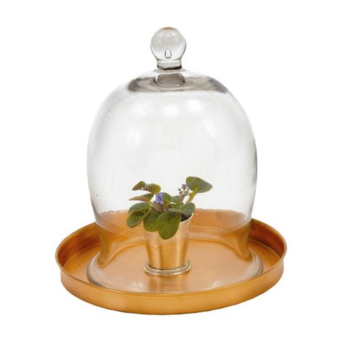 bell-jar-ideas-16