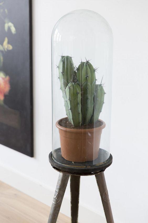 bell-jar-ideas-2