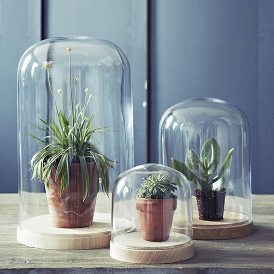 bell-jar-ideas-25