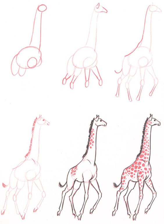 the long neck and the way it holds its head nature has given the giraffe an extra long and deceptively strong neck to enable it to chew tender leaves on
