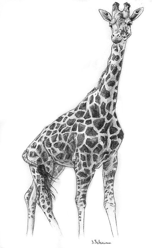 20 Ways To Draw A Giraffe Like A Cartoonist - Bored Art