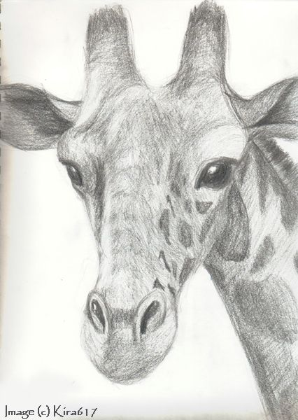20 Ways To Draw A Giraffe Like A Cartoonist - Bored Art