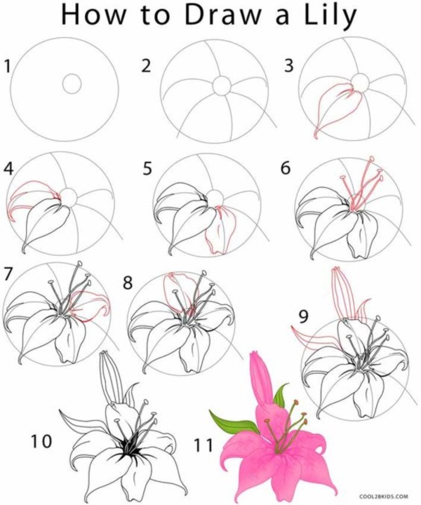 How to draw a flower step by step image guides for How to draw a basic flower