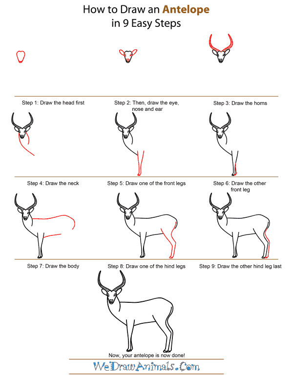 How to draw easy animals step by step image guide for How to draw a deer step by step