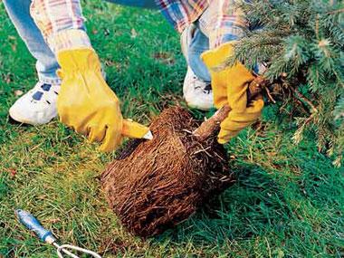 Gardening Tips For Beginners Bored Art