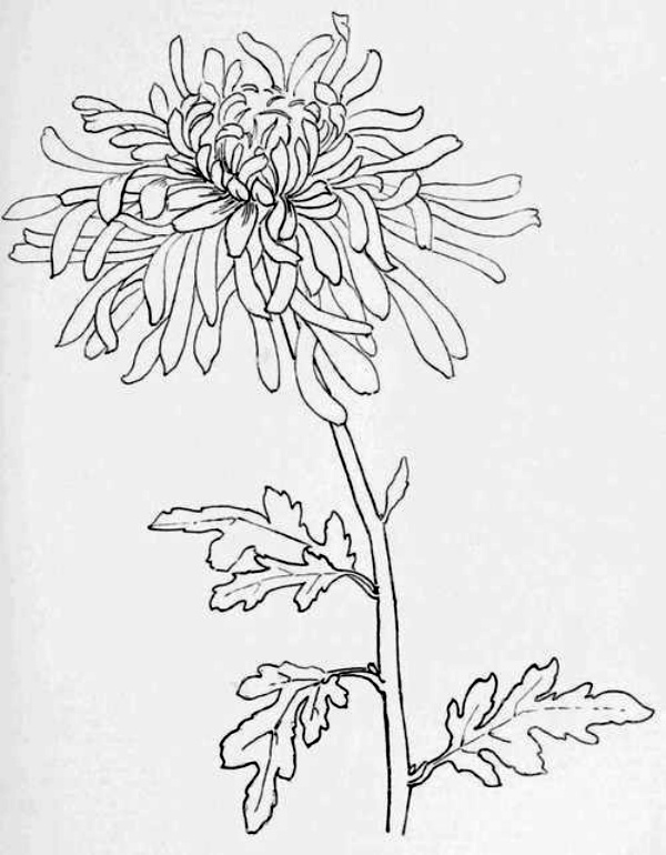 Line Drawing Examples : Best examples of line drawing art