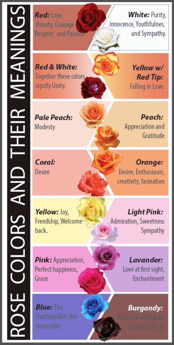 The Real Meaning Of The Different Rose Colors