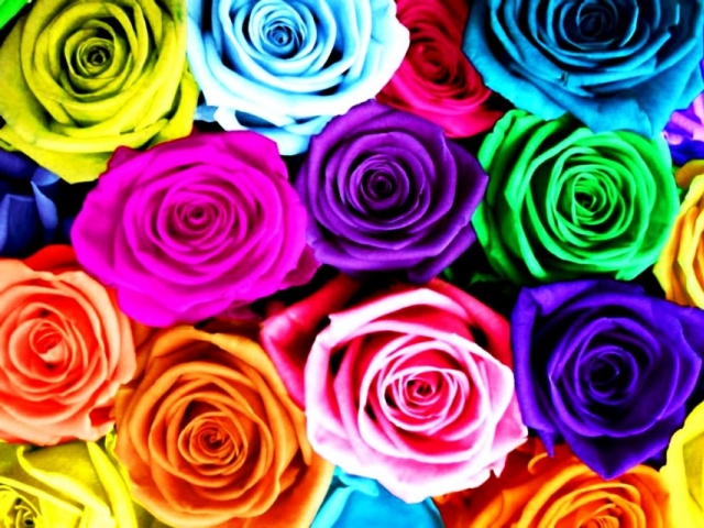 The real meaning of the different rose colors for What colors make rose