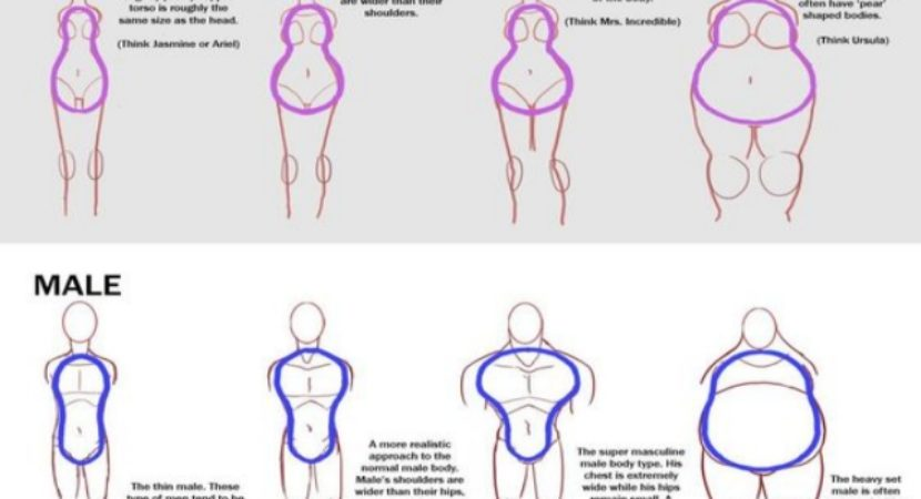 how to draw body shapes 30 tutorials for beginners bored art