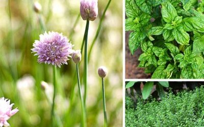 Needful-medicinal-plants-and-their-uses